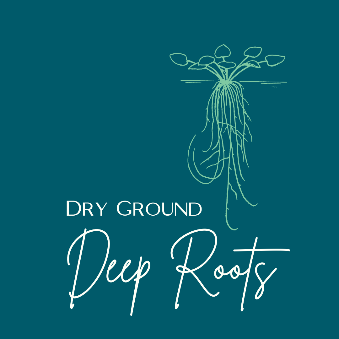 Dry Ground Deep Roots series