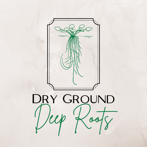 Dry ground requires deep roots